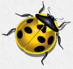 Coccinel !!!